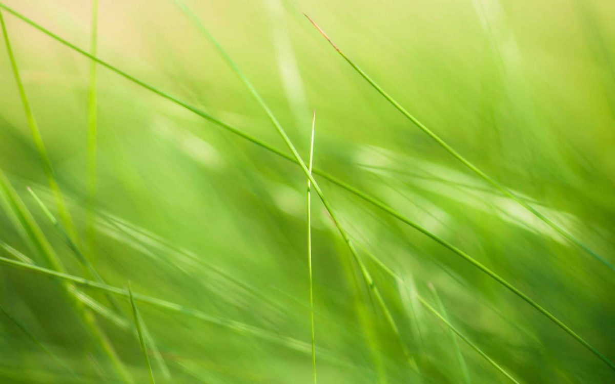 Plants grass nature wallpaper for smartphone daniel jenkins academy plants grass nature wallpaper for smartphone voltagebd Choice Image