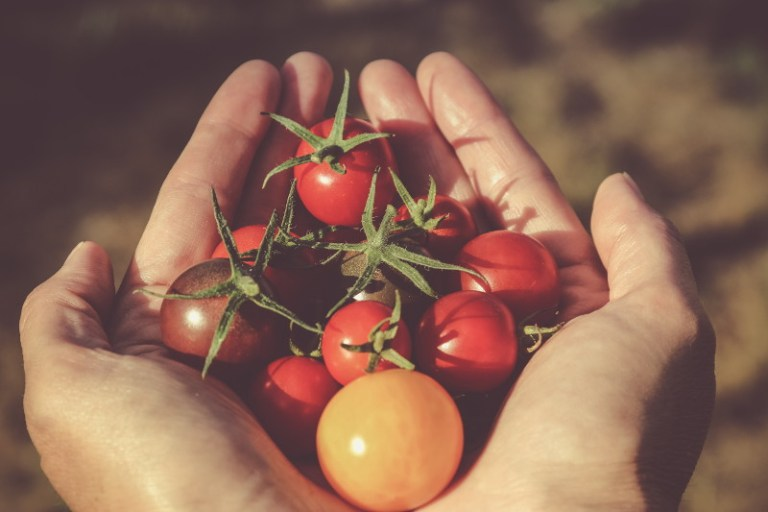 O Pomodoro nosso de cada dia
