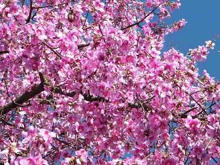 florais agnes