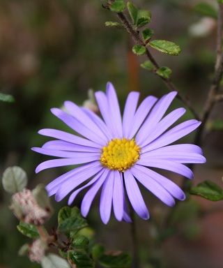 florais living essences