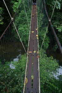 Above the Jungle on Canopy Walk