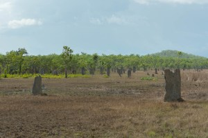 Termite Mounds at Litchfield National Park
