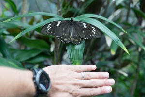 Butterfly Sanctuary close to Cairns