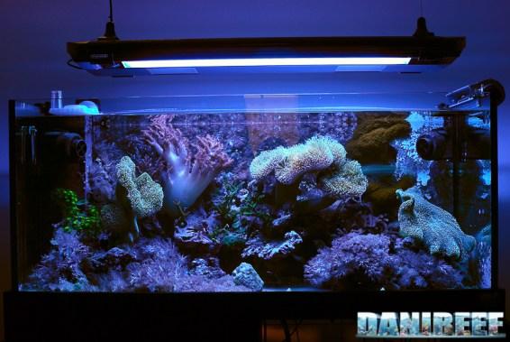 200709 Acquario marino con coralli molli luci blu layout 01 Copyright by DaniReef