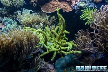 2015_12 Madagascar Reef Aquarium at Zoo Zurich82