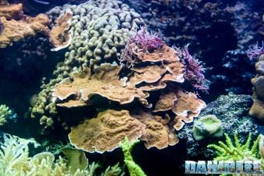 2015_12 Madagascar Reef Aquarium at Zoo Zurich83