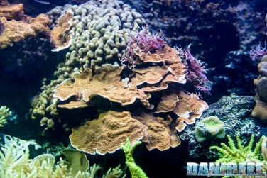 2015_12 Madagascar Reef Aquarium at Zoo Zurich83