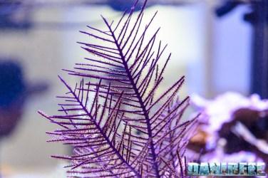 2016_05 gorgonia ecotech marine Interzoo Norimberga 01