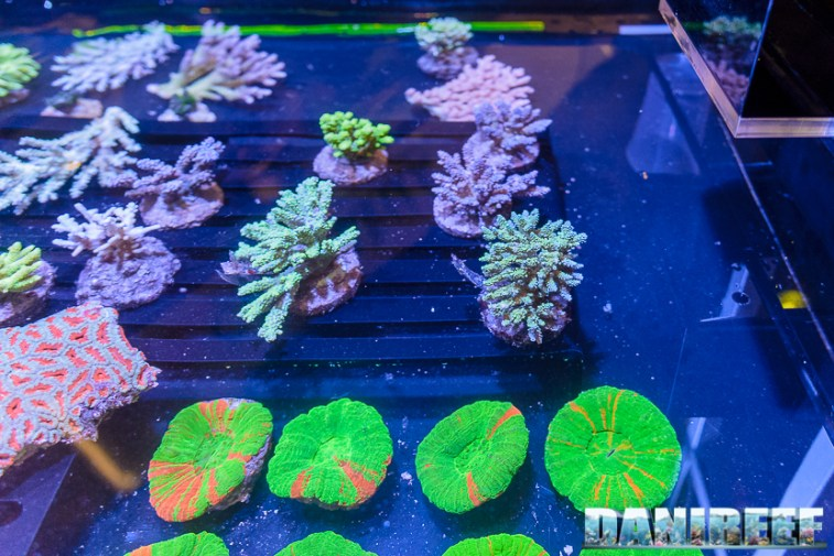 201610-coralli-petsfestival-reef-joker-62-copyright-by-danireef