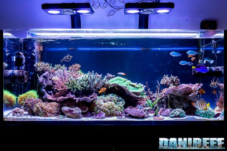 201701 acquario marino, layout 02 Copyright by DaniReef