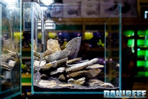 201704 acquario club, aquascaping, itau 22 Copyright by DaniReef