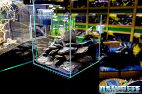 201704 acquario club, aquascaping, itau 25 Copyright by DaniReef