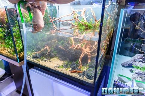 201704 acquario club, aquascaping, itau 40 Copyright by DaniReef