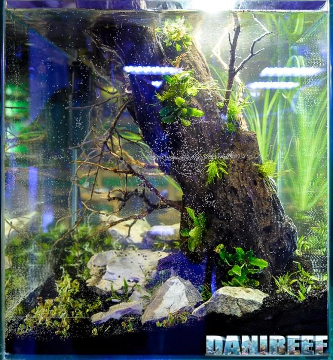 201704 acquario club, aquascaping, itau 43 Copyright by DaniReef