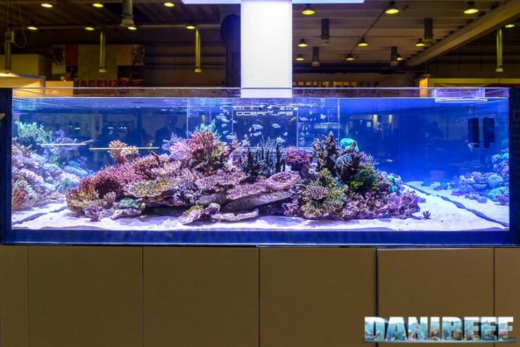 2017_10_Coralli, hobby acquari, layout, oceanlife, petsfestival 2017, sps_59