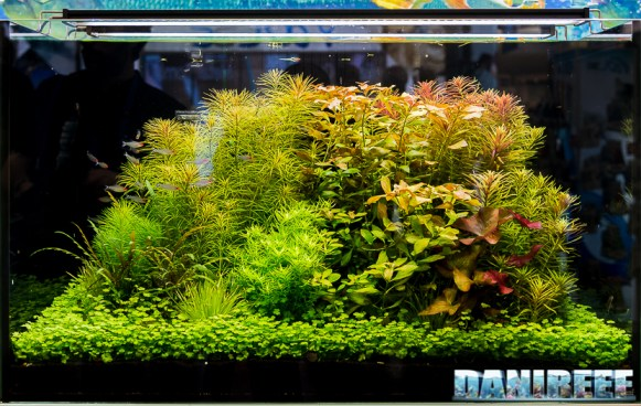 201805 aquascaping, dennerle, interzoo, layout 13 Copyright by DaniReef
