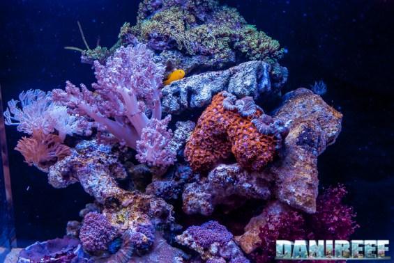 201805 dupla, interzoo, layout, minireef, nano ocean cube 80, nanoreef 20 Copyright by DaniReef
