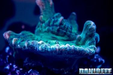 2018_09_Coralli, macna, sea dwelling creatures_105