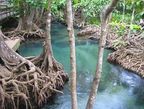 Tha Pom Klong Song Nam Thai natursti