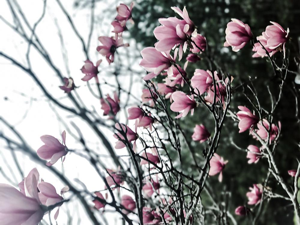 Early Spring in Atlanta