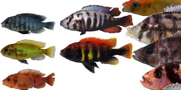 © Ole Seehausen, Fish Ecology and Evolution, Eawag, Switzerland