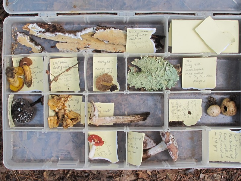 Collections box of long-term field and lab assistant Lara Kappler