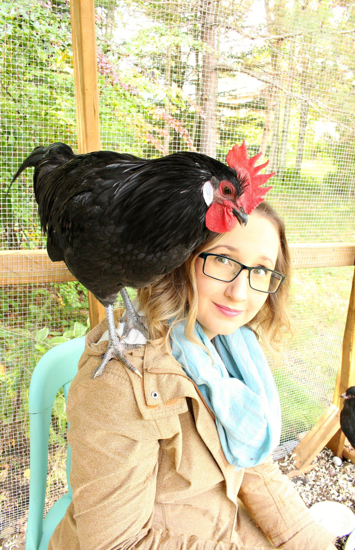 Re-Homing Roosters
