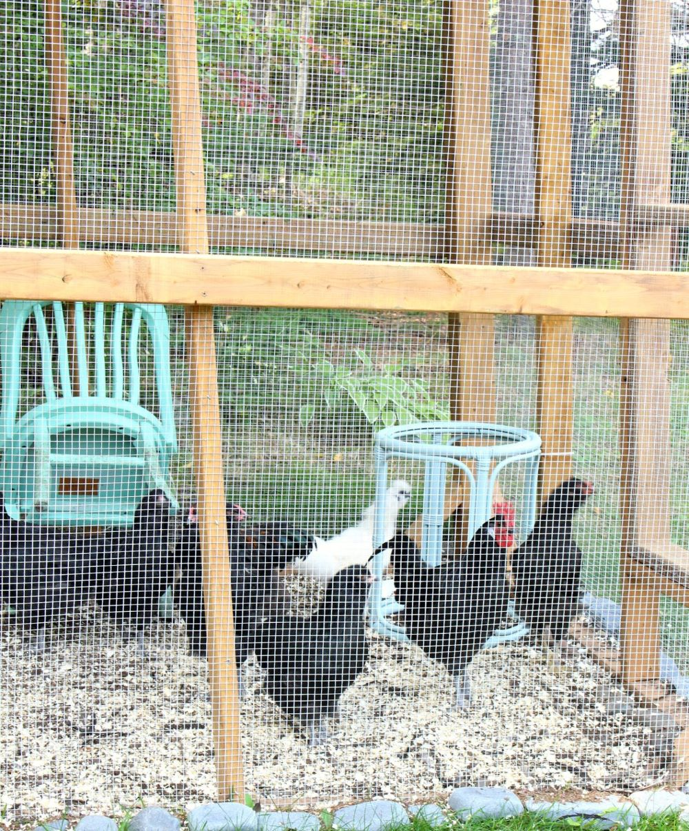 Chicken Run for Small Spaces
