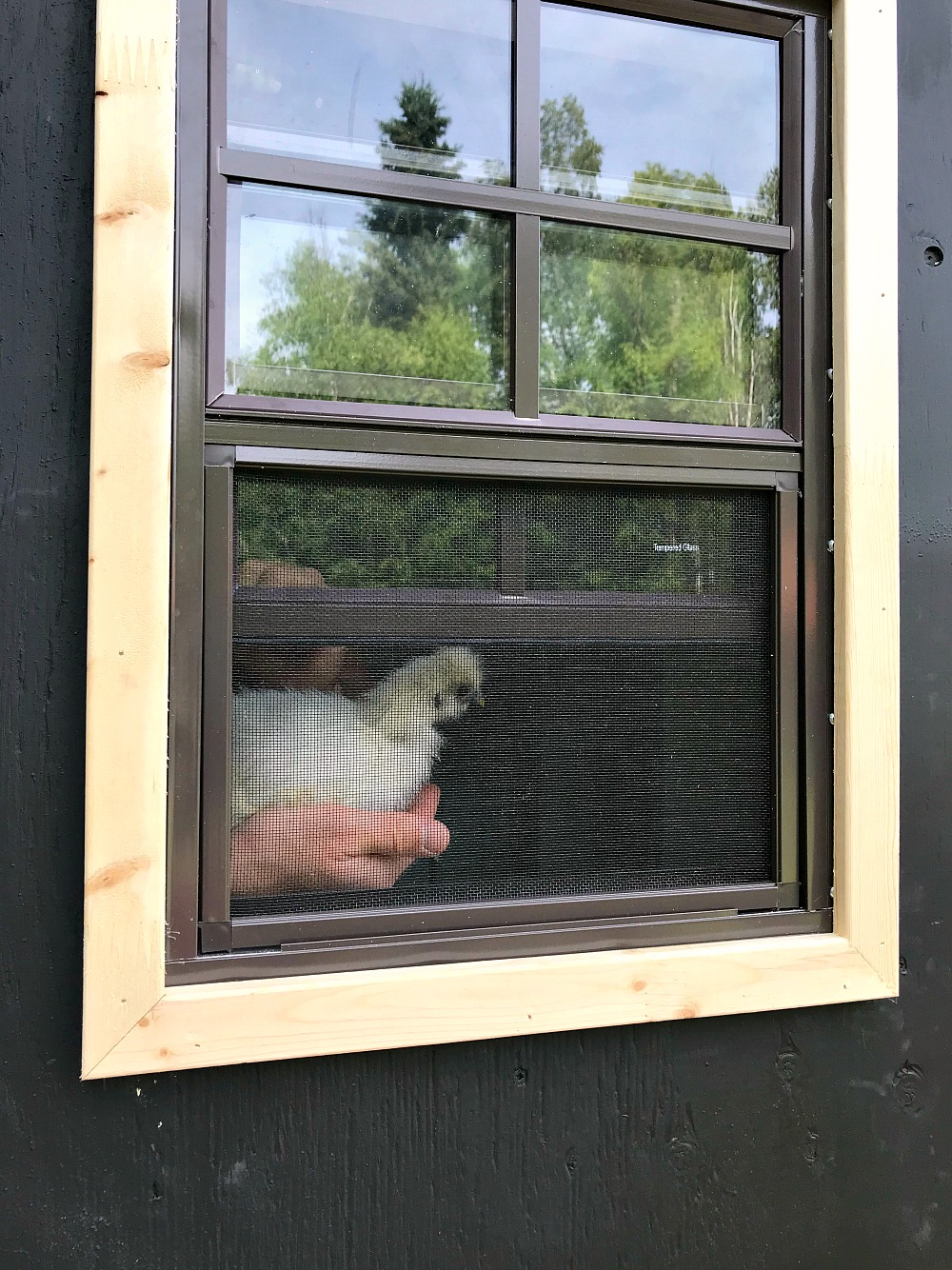 Trim Out a Shed Window