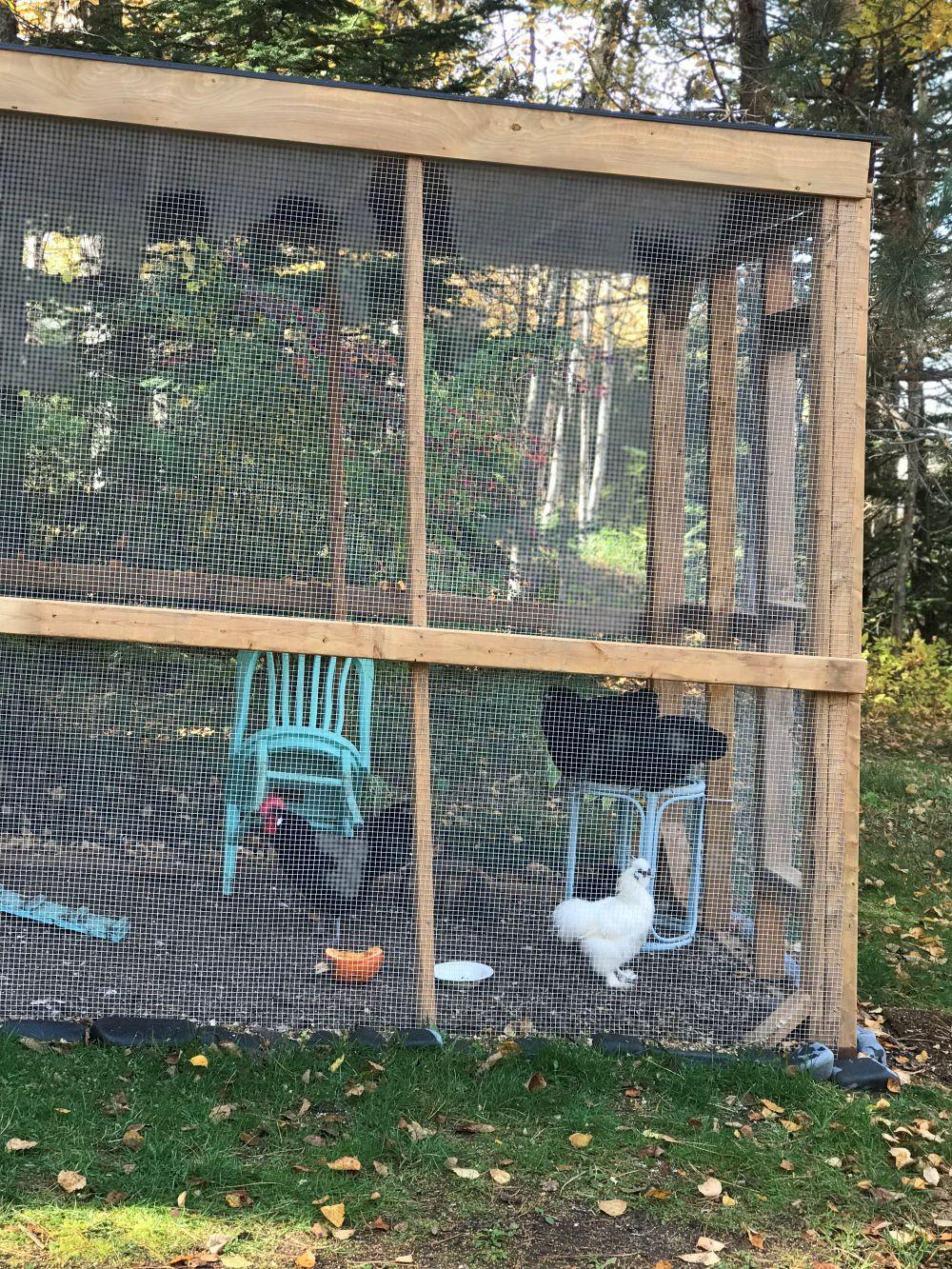 DIY Covered Chicken Run
