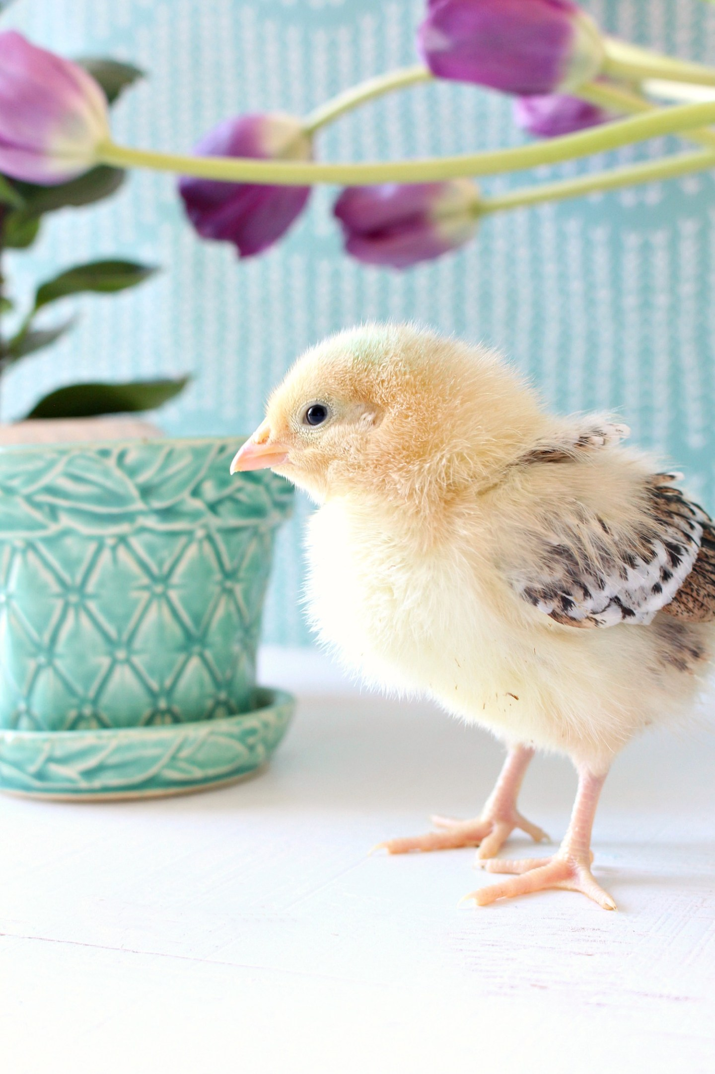 Sweet Yellow Chick Posing for Spring Chick Photos with McCoy Pottery