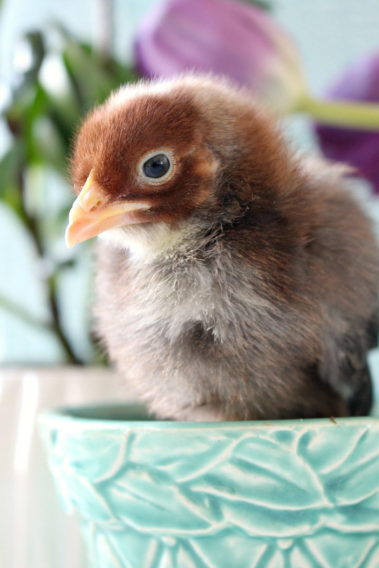 Chick Photo Shoot