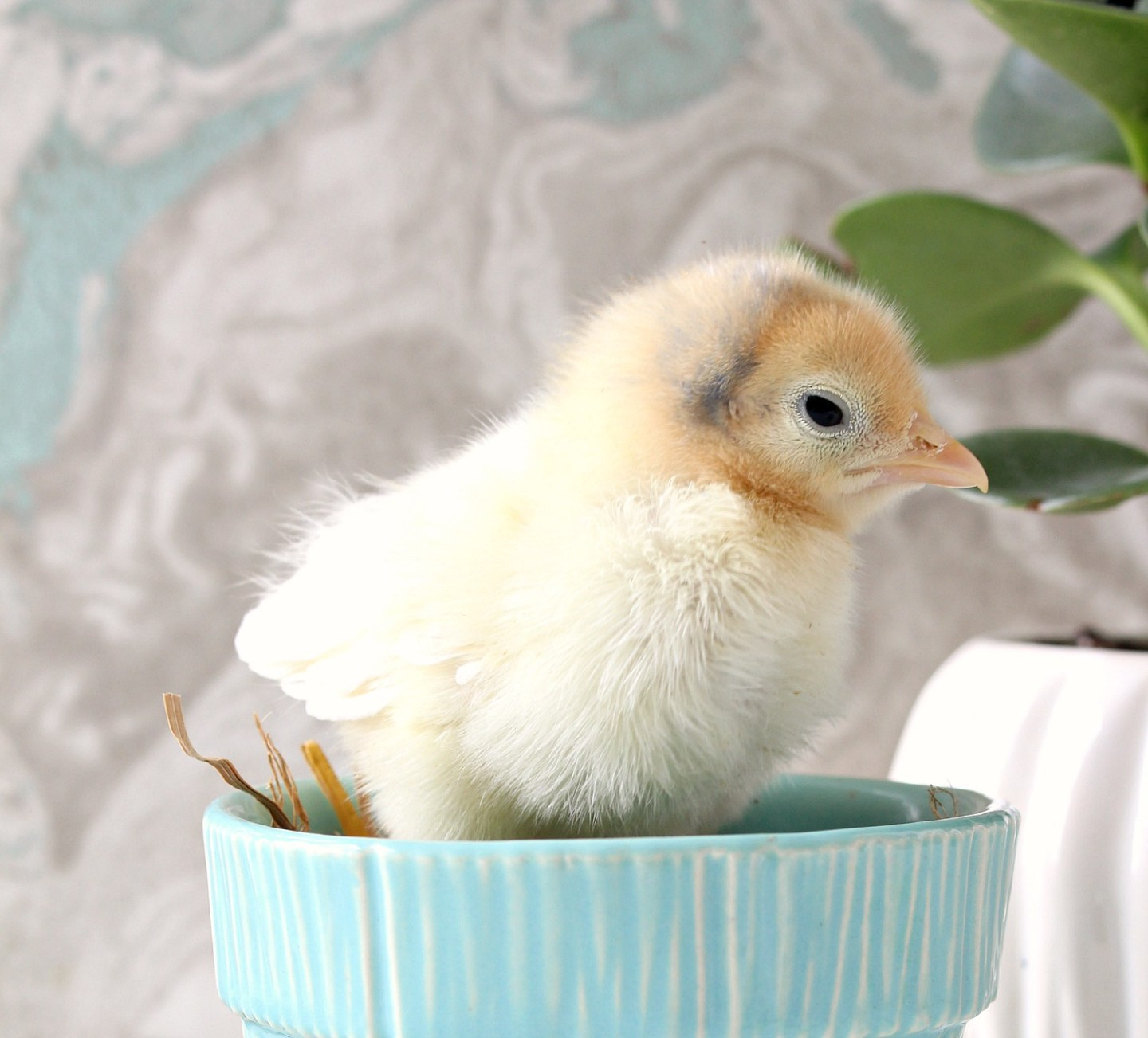 Yellow Chick in Vintage McCoy Planter