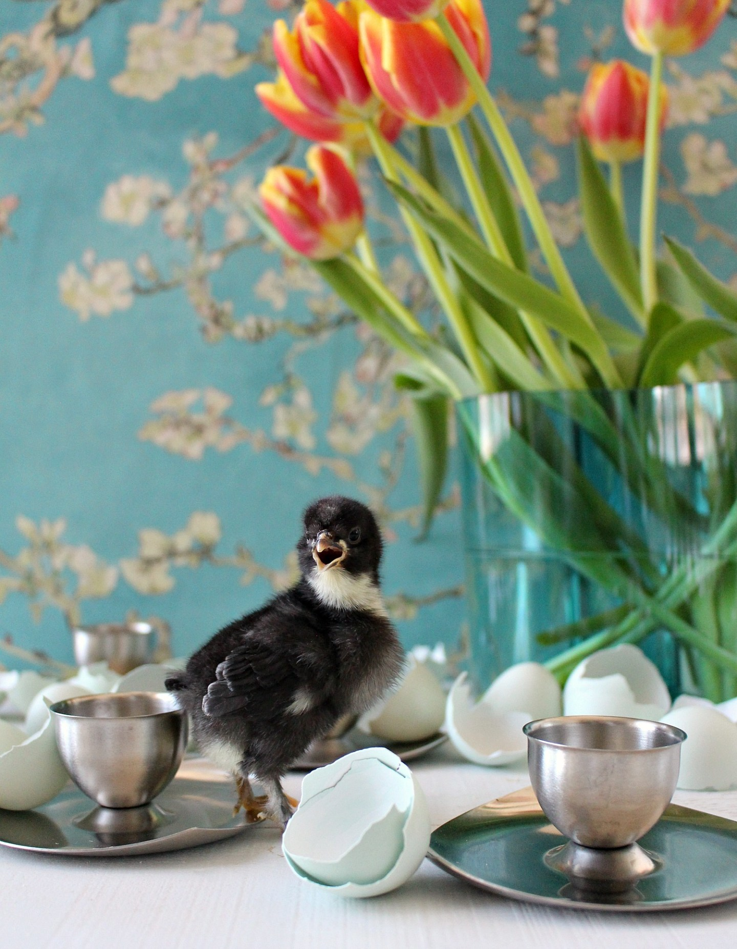 Spring Baby Chick Photos