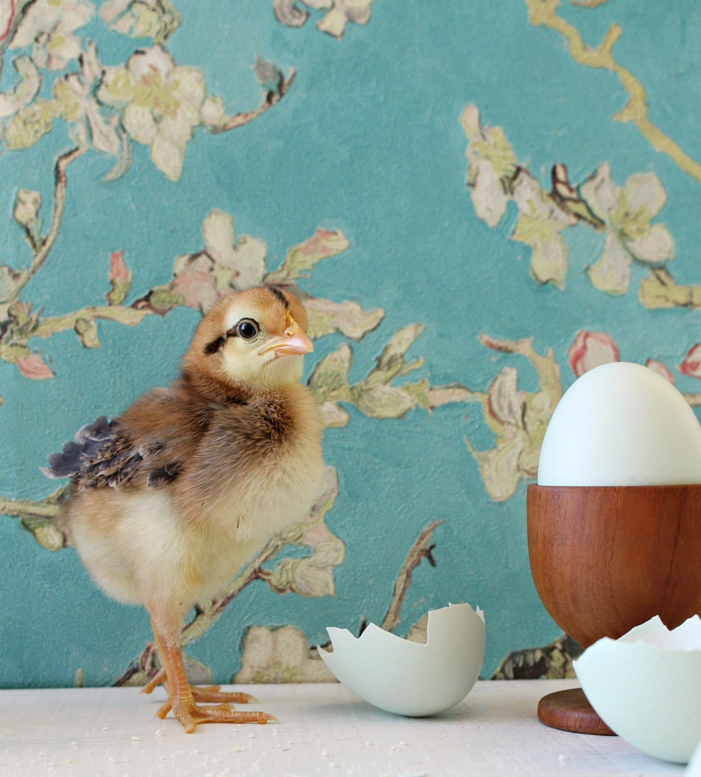 Spring Baby Chick Photos | We Got a New Batch of Chicks!