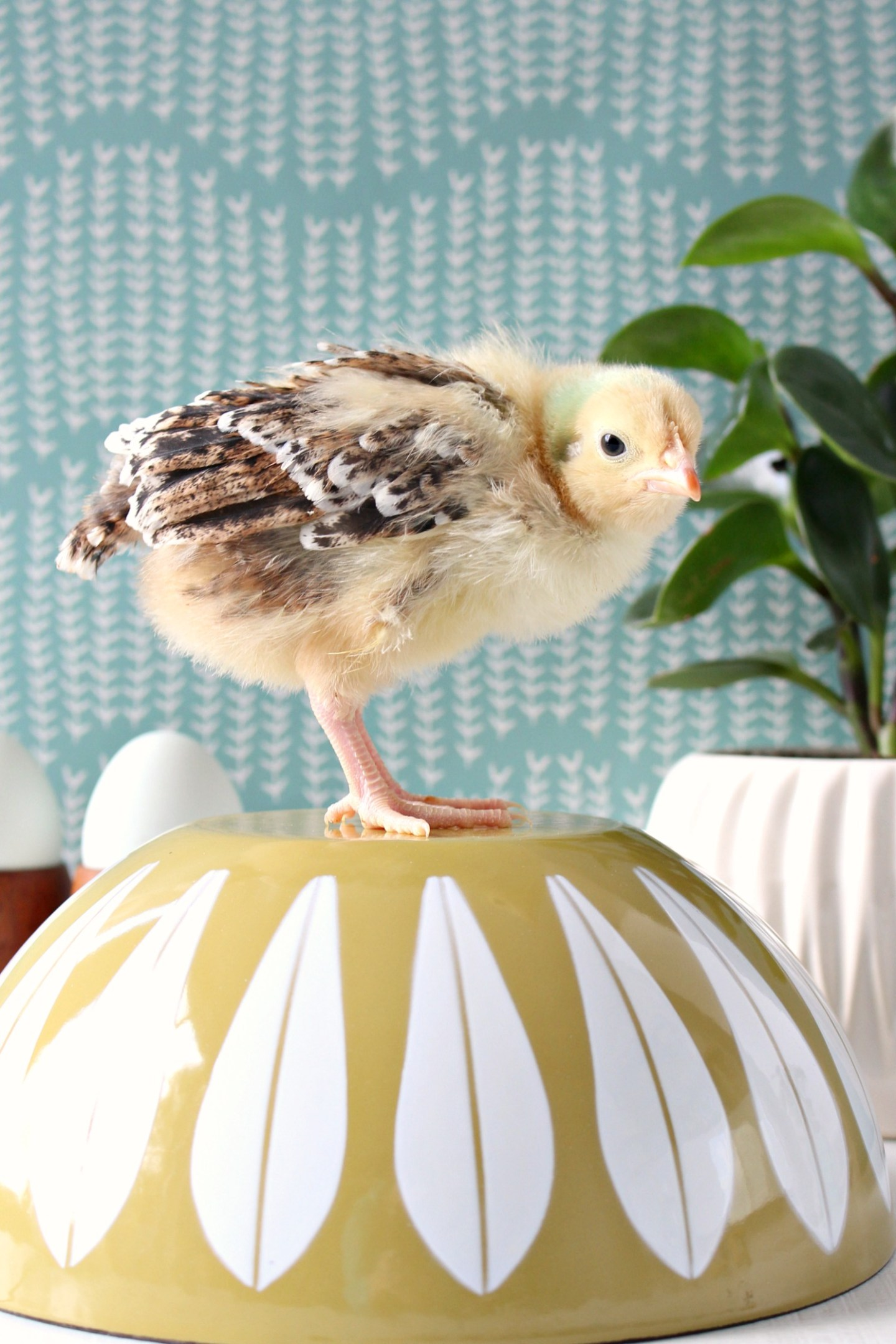 Chick Photo Shoot for Spring