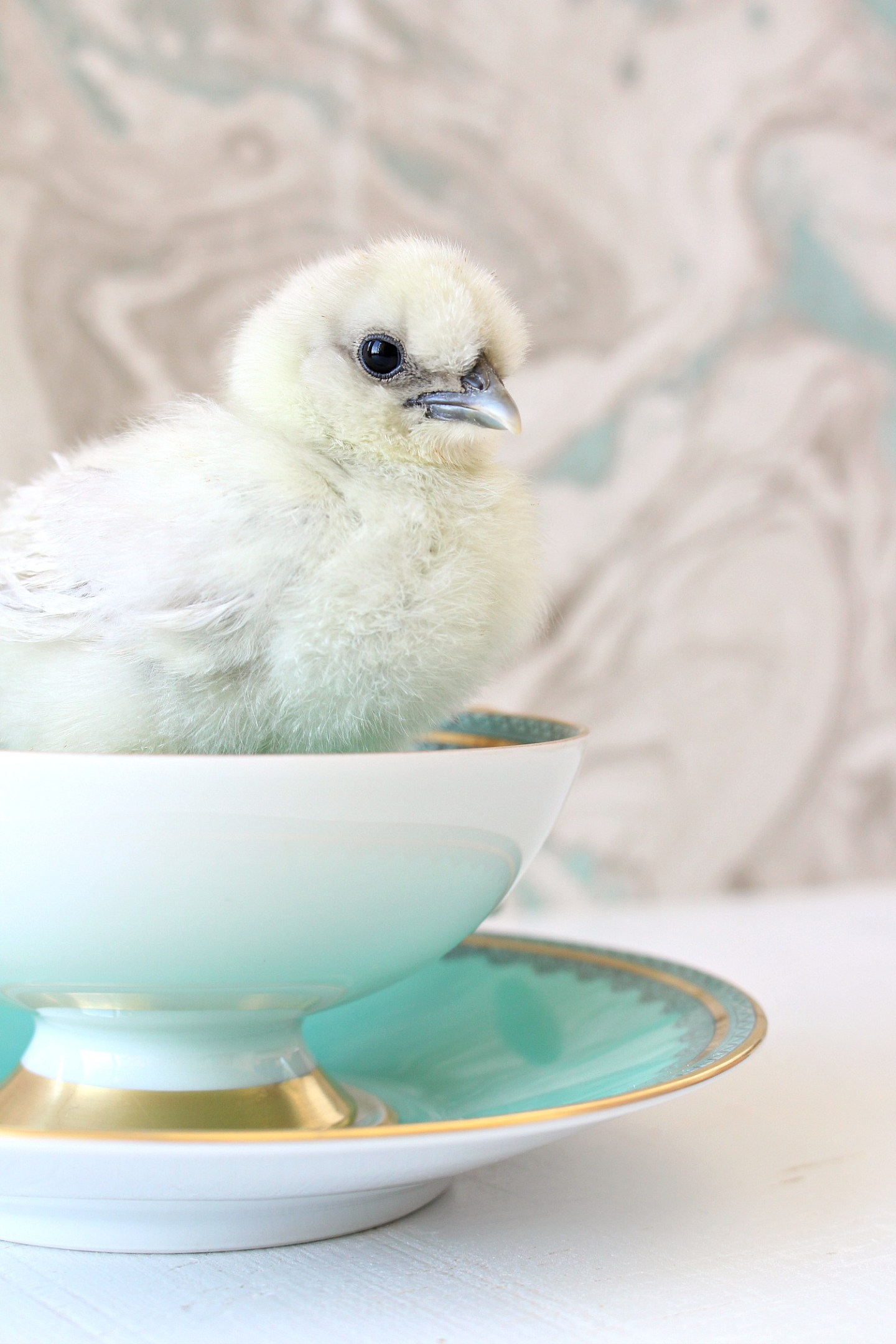 Adorable Chicks in Tea Cups