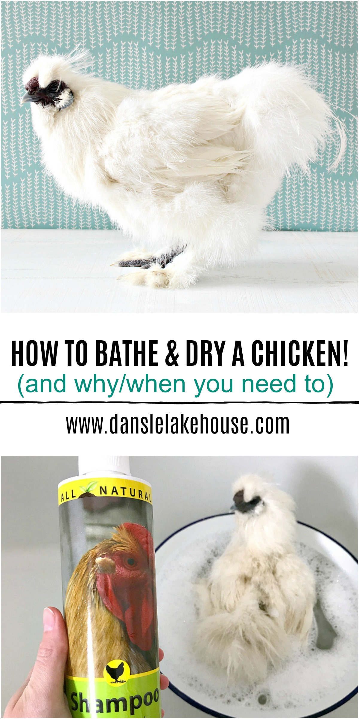How to Bathe and Dry a Chicken and Why/When You Need to Wash a Chicken