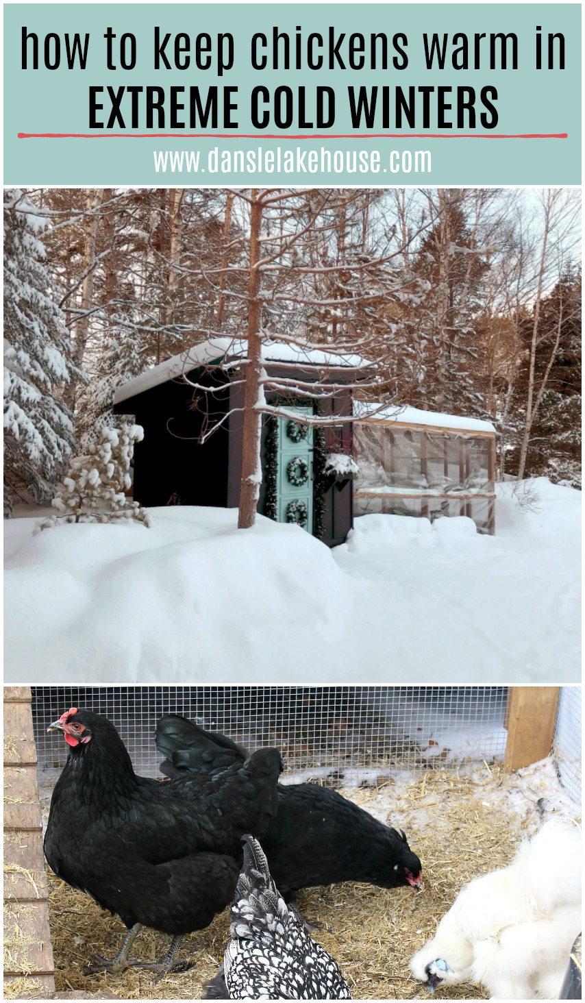 how to keep chickens warm in extreme cold winters
