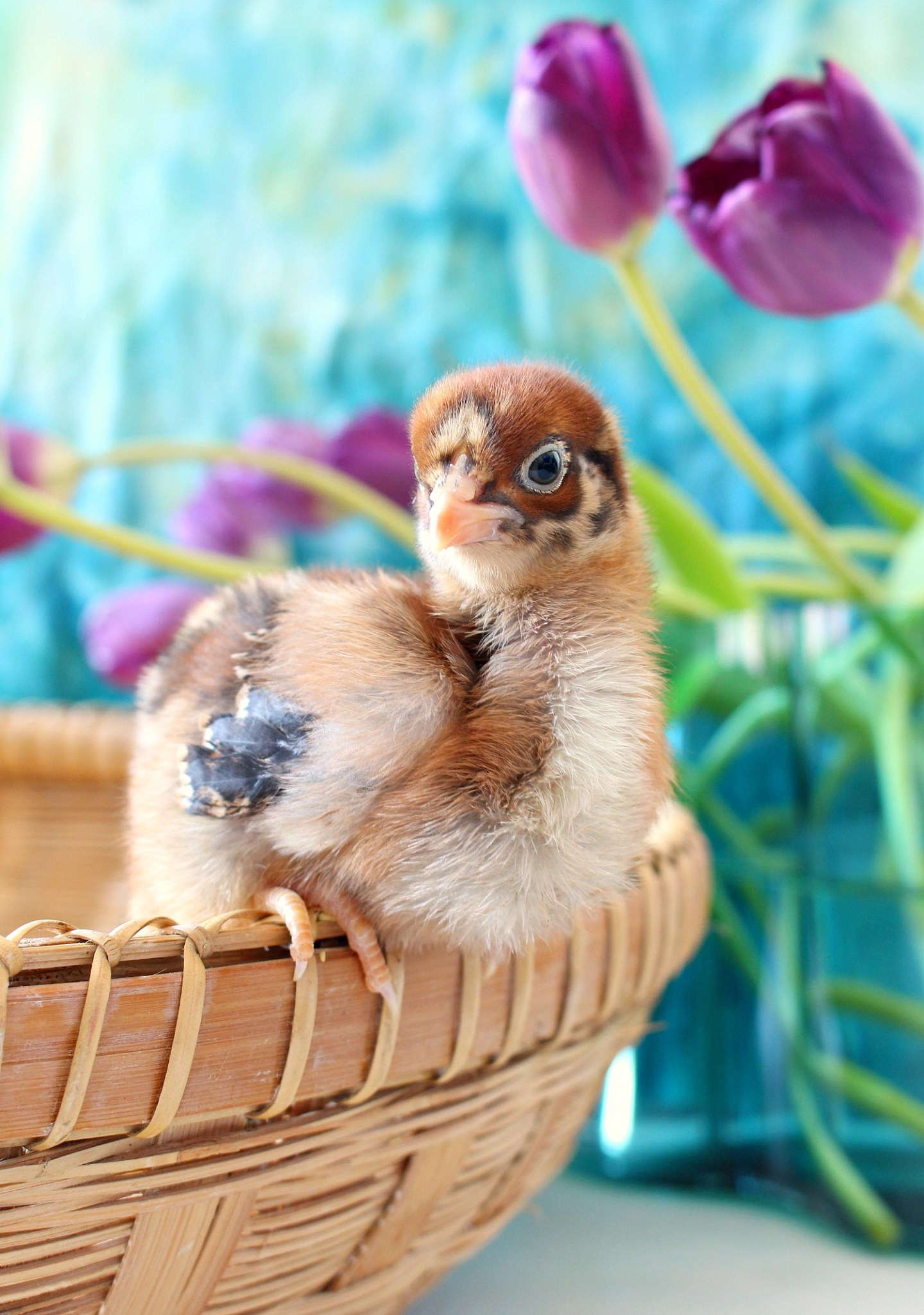 Photos of Spring Chicks Recently Hatched