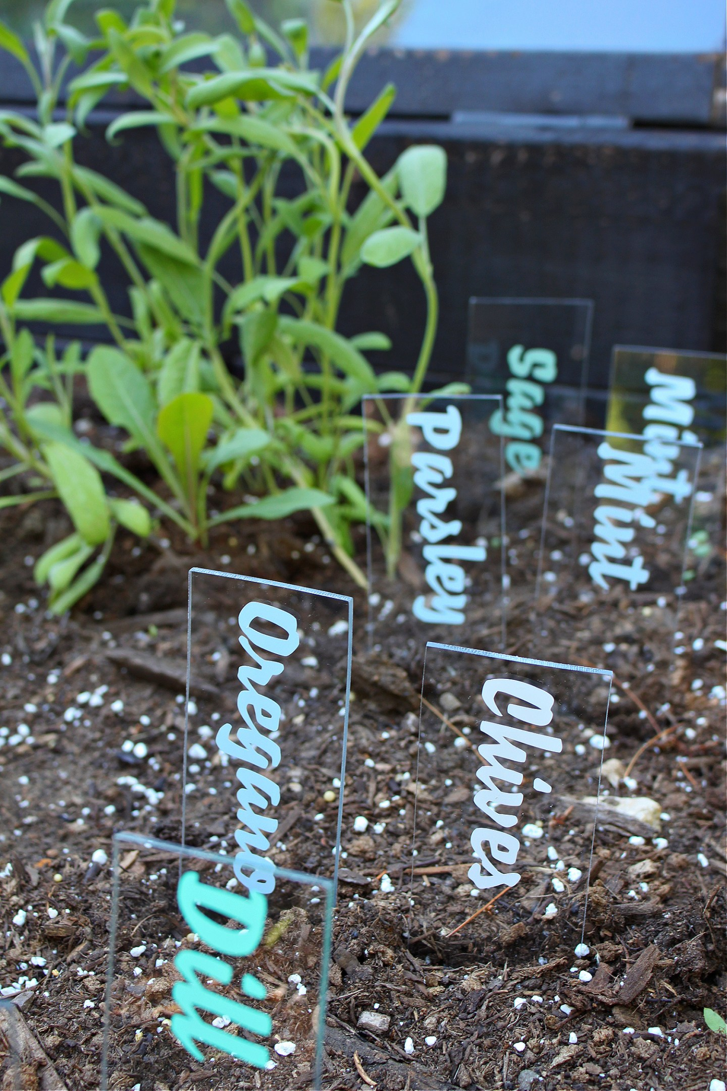 Clear Plastic Garden Markers