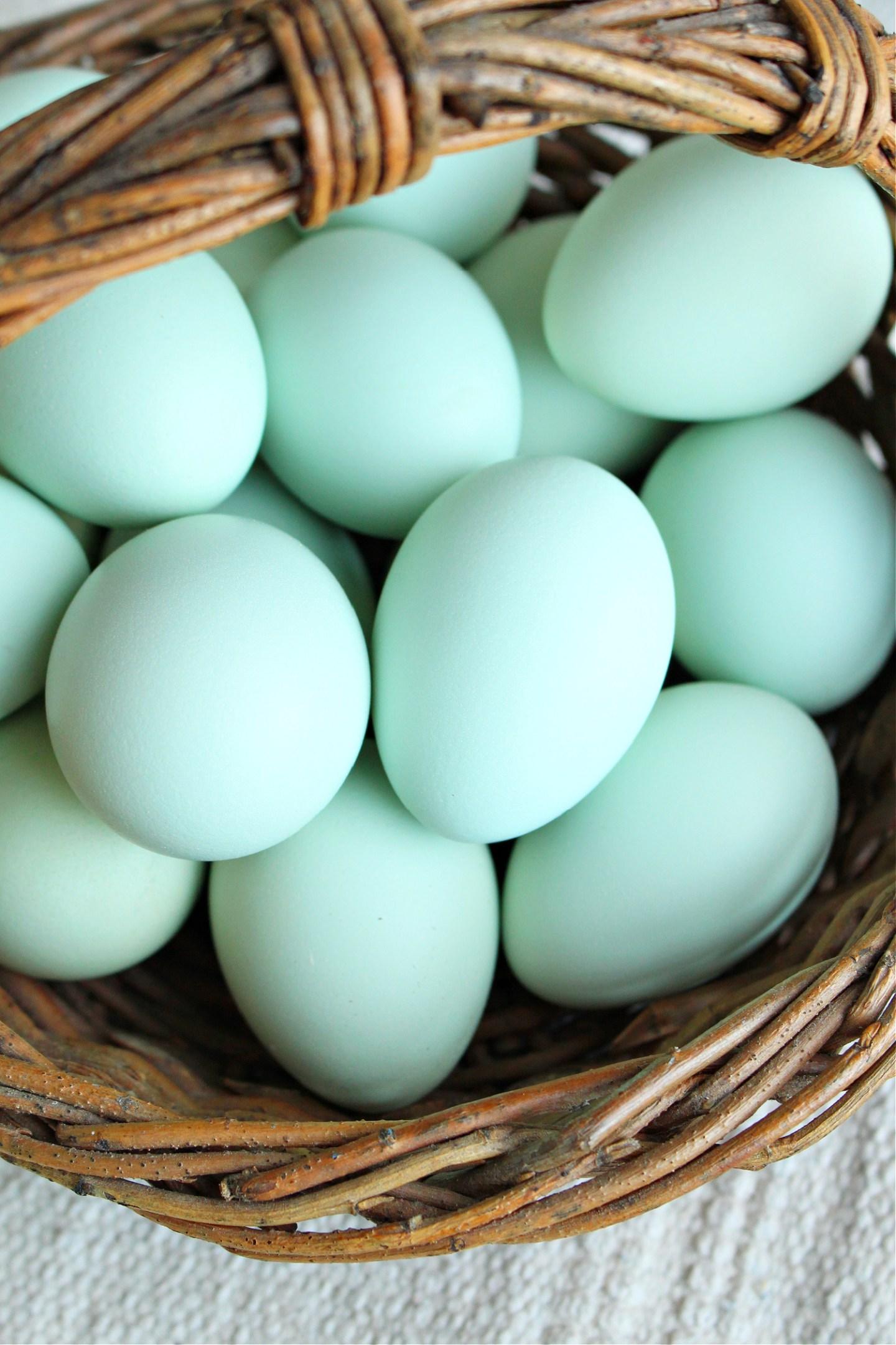 aqua eggs