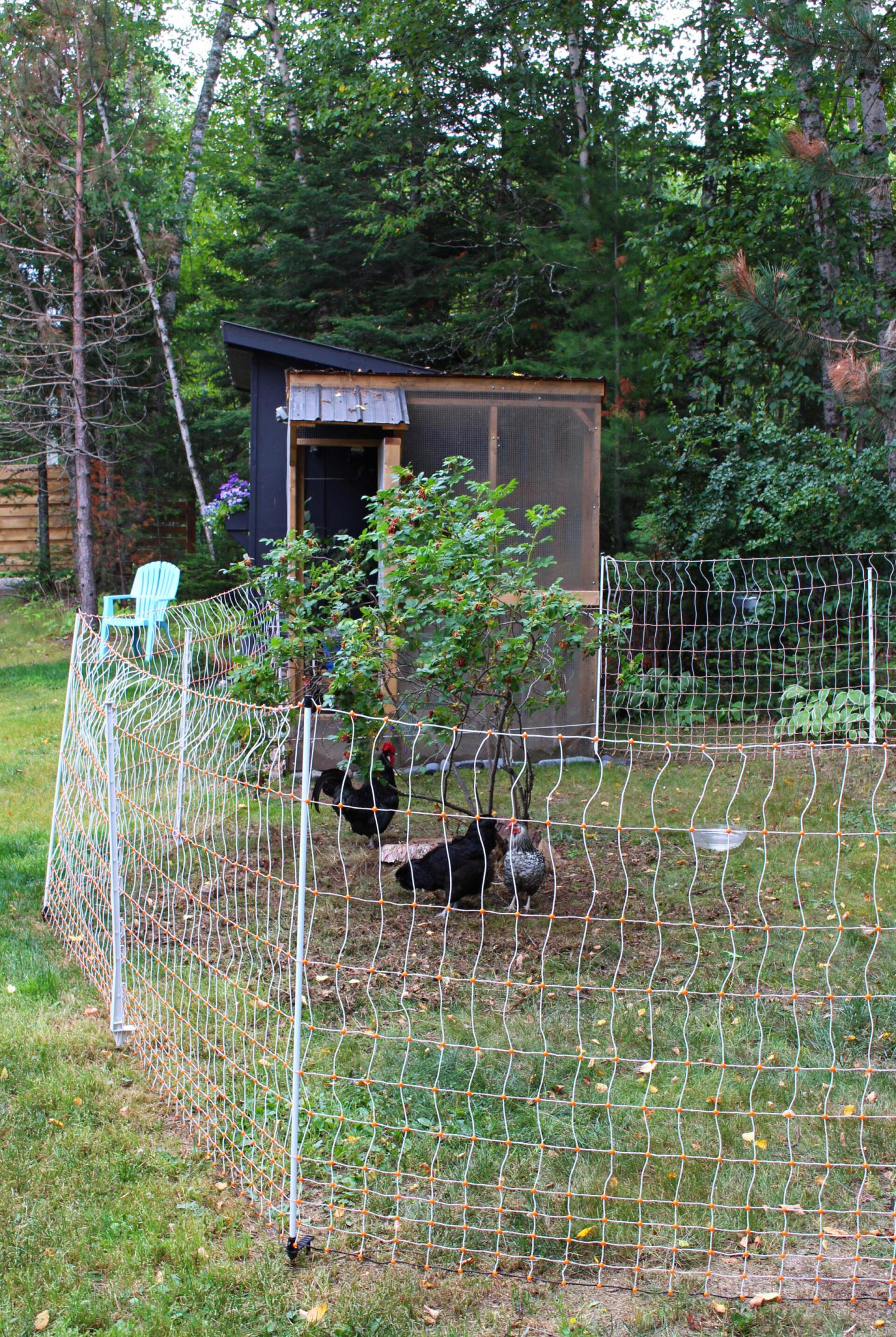 Electric Fencing for Chickens