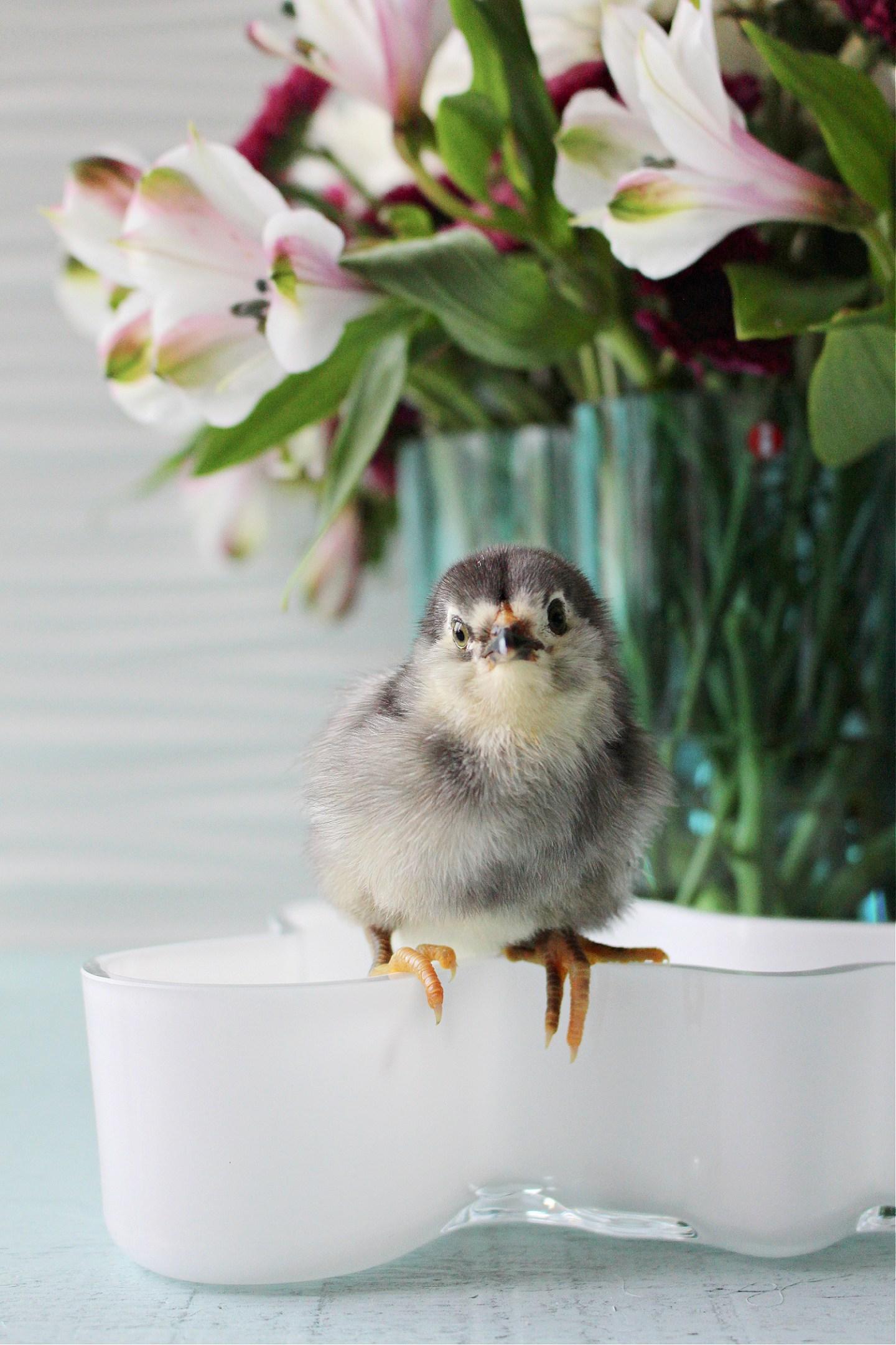 adorable chick photos