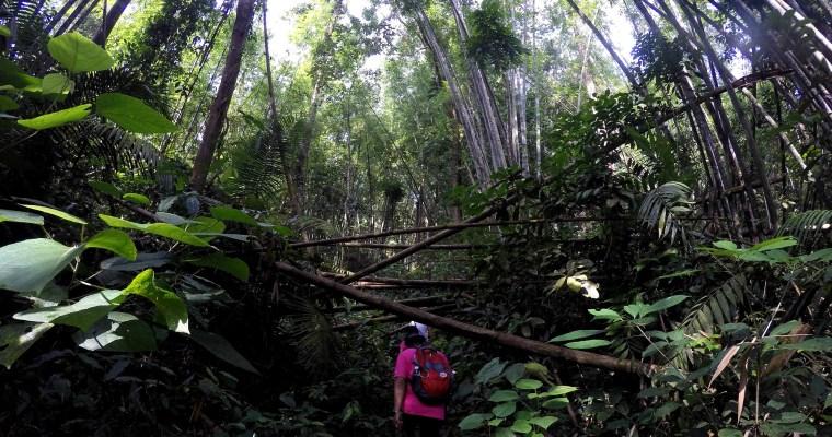 #TSDayOut – Bukit Kutu Expedition, Selangor