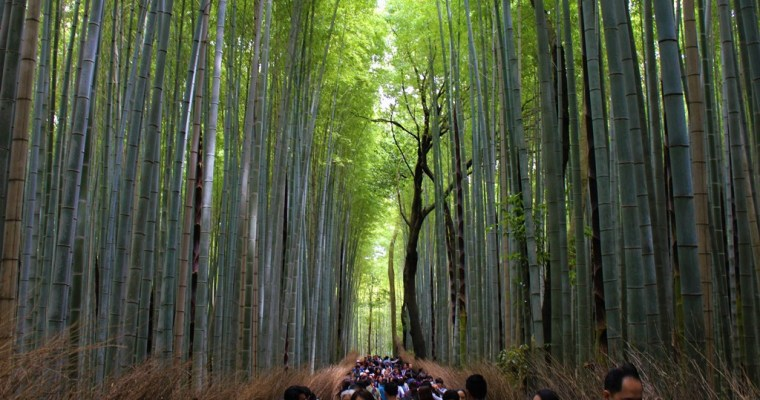 Arashiyama, Kyoto: Romantic Train, Bamboo Forest & Tenryu-ji
