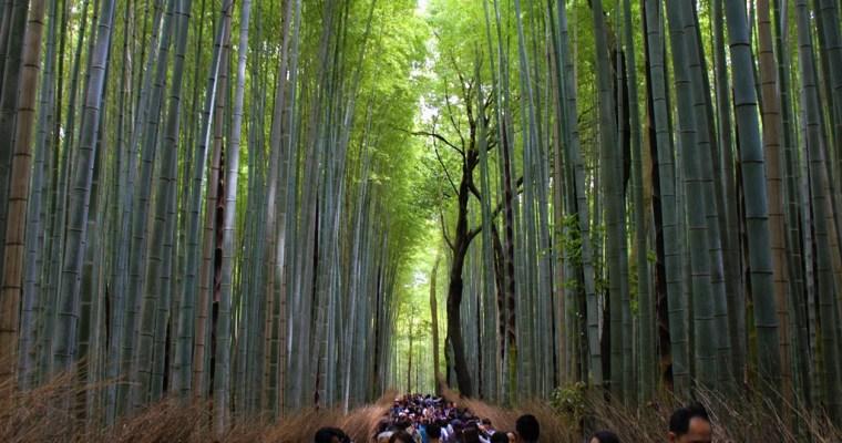 Arashiyama, Kyoto: Romantic Train, Bamboo Forest & Tenryu-ji