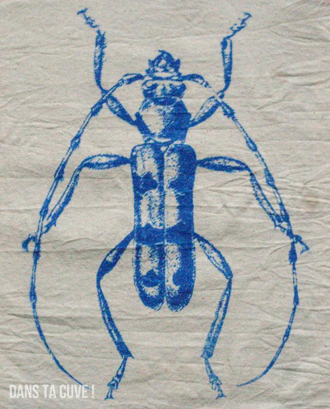 Une Rosalia alpina bleue... La première du genre =)