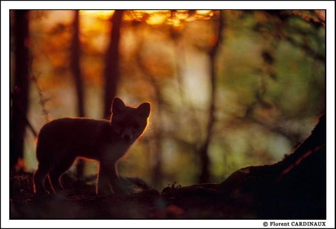 Copyright : Florent Cardinaux