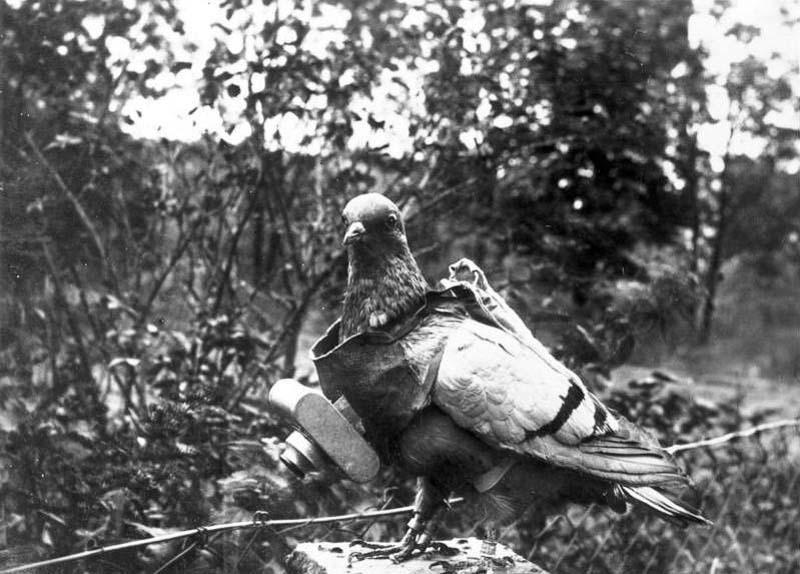 Des pigeons photographes